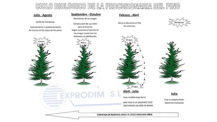 jardineros Valladolid